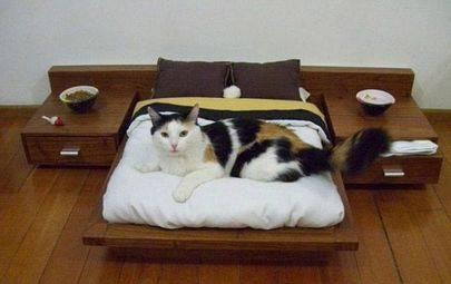 Везем кошку на передержку