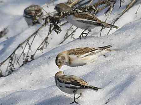 зима птицы ищут воду