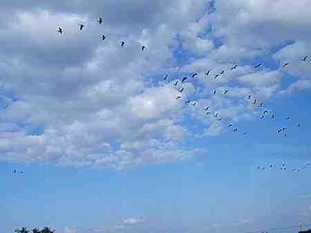 птицы возвращаются весной
