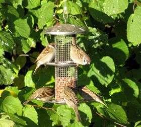 заблуждения о птицах