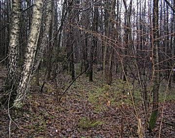 Осенняя жизнь леса