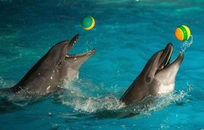 zhivotnye-delfiny3