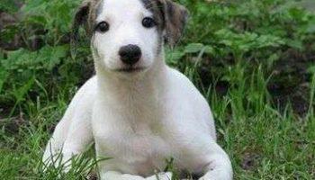 Как выбрать породу собаки?